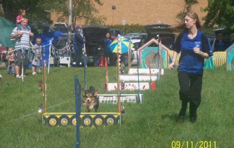 A obstacle course including jumps, funnels and ramp, the Rock N' Roll Canines event features a variety of dog breeds. The event was a fun competiton between the dogs and their trainers to win the best time without straying from the obstacle path.. Easier said than done!