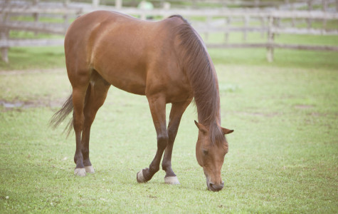 U.S. should not allow the slaughter of horses for meat