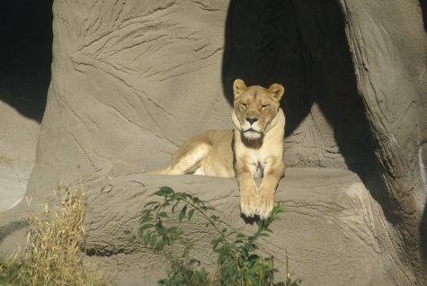 zoo-429
