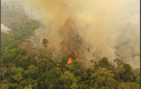 Worldwide panic escalates as fires scorch the Amazon